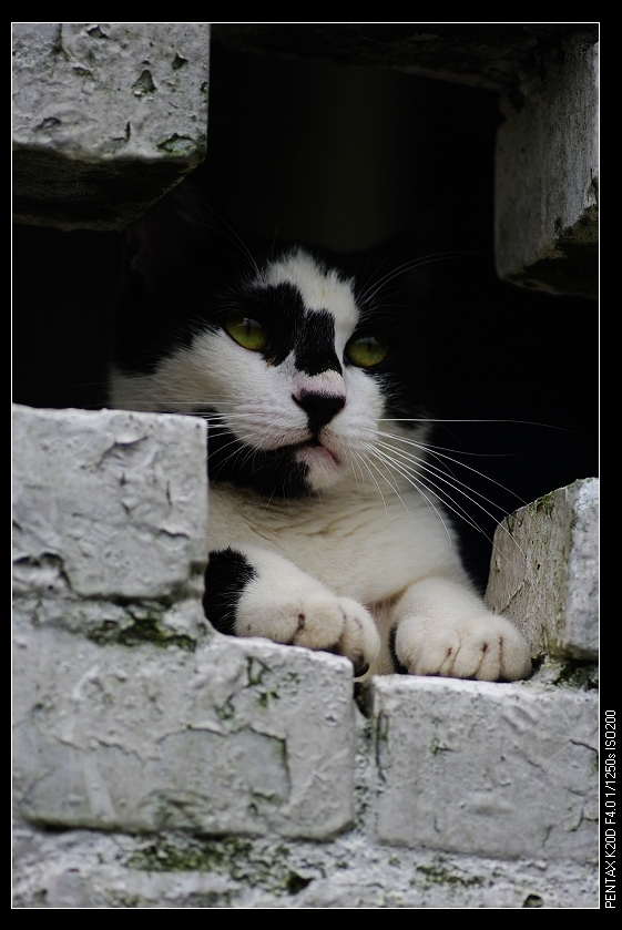 2010/05/16 候硐 寫一隻貓!