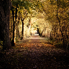 A day in autumn (Sebastian_Stern) Tags: autumn trees shadow orange sun sunlight color colour green grass leaves forest way 50mm day walk sony tag laub herbst foliage gras grn alpha f18 a200 sonne wald bltter farbe bume schatten weg sonnenlicht sonyalpha sony50mm sonya200 sony50mmf18 adayinautumn sebastianstern