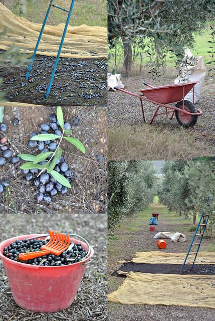 Vario olive