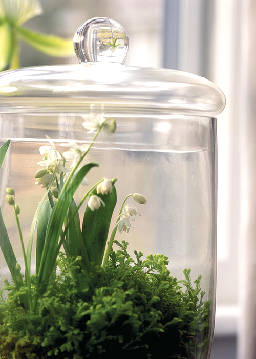 lily of the valley terrarium via country home