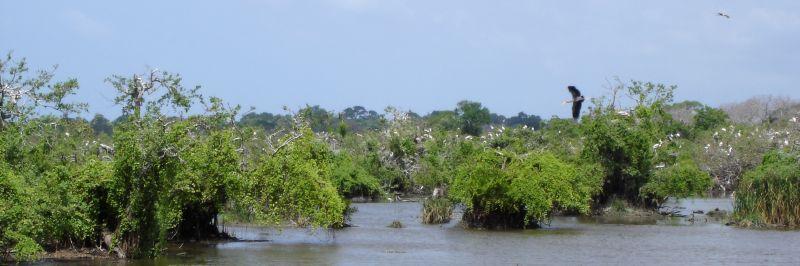Stork Nesting Area