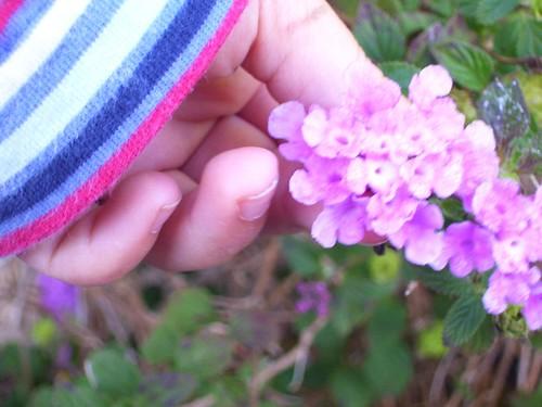 fiori da qui 3