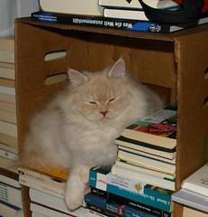 Lese-Katze