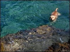 Vita da cane - by luca.candini