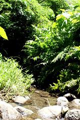 IMG_4127.JPG (nia-briana) Tags: green stream waipio