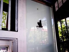 Sept07 047 (Lord Jim) Tags: streetart la losangeles newimageartgallery marsea windowzoo