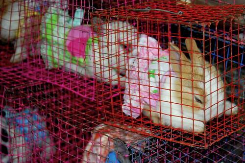 Chatuchak market 3