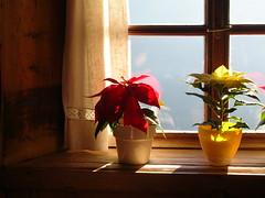 Il calore dell'Alto Adige (52Bunny) Tags: garden nikon colours coolpix alto adige l15 52bunny