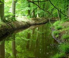 the water flows along the creek ... (Mieke Vos Photographics) Tags: trees reflection green creek forest mirror bravo greenwater naturesfinest supershot flickrsbest abigfave gelderslandschap hierdensebeek superaplus aplusphoto thewaterflowsalongthecreeksocalmlikearippleinstillwater