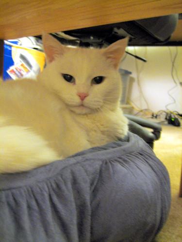 Pandora in Her New Bed