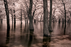 the flood (infrared) (mike.irwin) Tags: longexposure trees lake reflection water ir interestingness nikon long exposure texas flood explore infrared lewisville hoya r72 utatafeature nikonstunninggallery abigfave wwwmikeirwinartcom