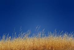 Grass & Sky (krobbie) Tags: california geotagged los random hiking hike d200 50mmf18d trancos nikond200 krobbie nikoncapturenx geo:lat=37332495 geo:lon=122175452
