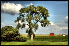 A Tree Without Its House II (Rascaille Rabbit) Tags: tree illinois barns mcleancounty proudshopper mcleancountyillinois