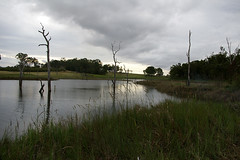 tinaroo dam (theshutdoor) Tags: sunset water grass clouds silent dam twisted deadtrees