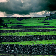Yorkshire Dales: Austwick Walls (steffanmacmillan) Tags: trees grass stone clouds sheep handmade yorkshire overcast stormy august hike rainy granite handheld summertime tramping drystonewalls tramp ramble yorkshiredales handbuilt naturalmente naturesfinest nps160 epson4990 yomping 25faves abigfave aplusphoto travelerphotos goldenphotographer northerngrit 4800dpiscan mpressiveimages fujifilm67ii