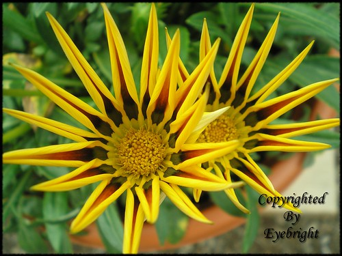 Spikeyyellowflower