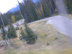 Driving home (jensouthern) Tags: valley larch