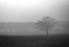 foggy treeism #4 (mikeasaurus) Tags: winter blackandwhite tree film nature monochrome fog bayern bavaria evening twilight nebel kodak sw ricoh baum zone 2007 3200asa stauden autaut december2007 kr10x
