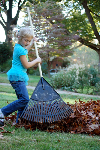 raking leaves into a pile for jumping