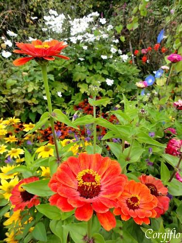 BlogJardin-101022-jardinNormandie-3
