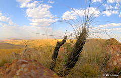 Cradle of Humankind - Flora - by Martin_Heigan