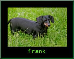 Frank - by TakenByTina