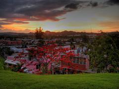Bayamon Sunset (brendon.m) Tags: puerto rico flamboyan bayamon