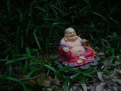 Bright Hotei in the cool evening monkey grass  (denseatoms) Tags: abend buddha capim erba gras soir happybuddha hotei tarde monkeygrass herbe sera hierba  maitreya budai seara putai iarb lyriope sear