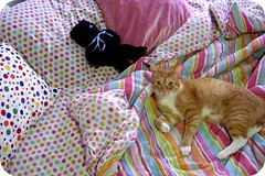 zachary (indielove) Tags: pets animals cat bed sleep kitty polkadots photo365