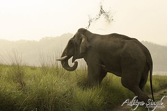 Wild elephant (dickysingh) Tags: wild india nature big outdoor wildlife aditya elephants corbett singh smrgsbord corbet dicky indianwildlife indianelephants amazingtalent corbettnationalpark asianelephants corbetttigerreserve asiaticelephants elephantpark mywinners wildelephants elephantreserve ranthambhorebagh thatsbostin adityasingh dickysingh ranthamborebagh theranthambhorebagh mailciler elephantsrhinosgiraffeshippos