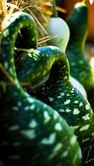 Funky Gourds