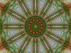 The Vine (Lyle58) Tags: wood brown abstract green geometric leaves yellow circle grain vine kaleidoscope symmetry zen harmony round reflective symmetrical balance leafy circular kaleidoscopic kaleidoscopes 12sided kaleidoscopesonly 12pointed