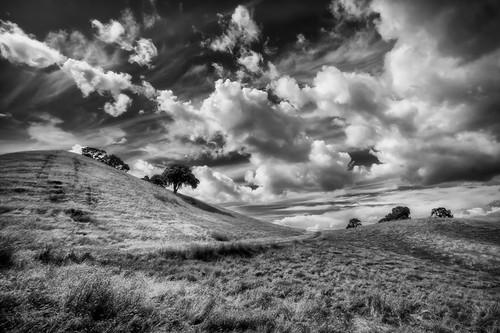 Windswept Sky