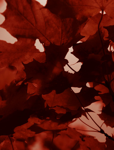 halloween, leaves, shadows, red