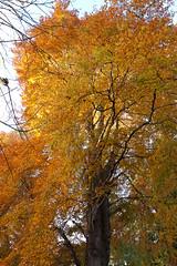 Monteviot House Gardens-17 (davidmunro) Tags: autumn trees scotland monteviot