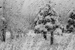 natural texture (lidili) Tags: trees winter white snow black tree nature rain daylight bokeh patterns row rows windshield