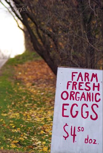 Roadsign_Eggs