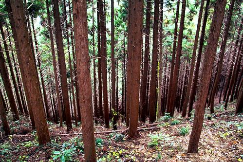 Trip to Mt Takao