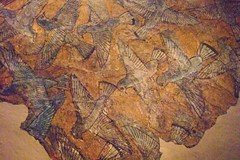 Ceiling fragments from the palace of Amenhotep III Dynasty 18 1390-1353 BCE from Thebes (mharrsch) Tags: art museum ancient egypt palace ceiling fresco metropolitan amenhotepiii dynasty18 14thcenturybce mharrsch