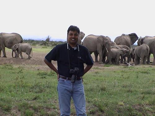 SW Elephant Herd