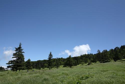 The wild grass garden at Mugikusa Pass