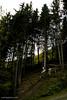 DSC_0077.jpg (wangapoa) Tags: downhill freeride bikepark sauerland winterberg wangapoacom pixelmator 77designz