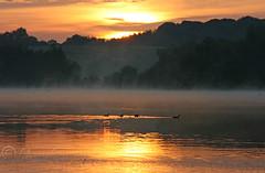 On golden pond.. (Digital Diary........) Tags: uk mist nature water sunrise golden ducks sthelens merseyside chrisconway carrmilldam