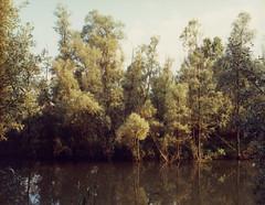 lombardy (Mike Baluk) Tags: italy landscape kodak 4x5 160vc portra lombardy 5x4 wista nikkor120f8