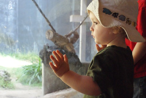 Boone observes the chimps