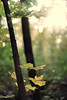 sun leaf (montnoirat) Tags: nikon focus 28mm e series mf kodachrome manual d200 nikkor manualfocus f28 georg seriese i schwarzenberger georgschwarzenberger ゲオルクシュワルツェンバーガー