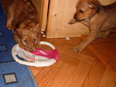 Hunde - 61 (Manfred Lentz) Tags: pets dogs puppy pups puppies hunde littledogs welpen hndchen babydogs whelps