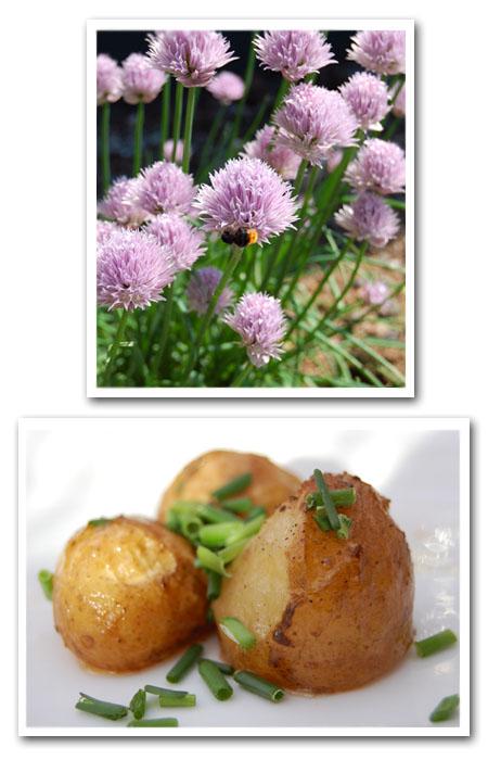 potatis copy