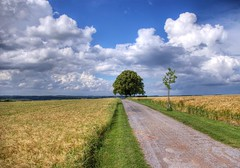 3 Linden (the_oli) Tags: home nature clouds germany landscape deutschland natur wolken nrw coolest hdr mnsterland muensterland thebigone 333views blueribbonwinner coesfeld photomatix supershot k100d hdrfromraw abigfave superbmasterpiece naturefinest superhearts ysplix theoli peopleschoicerecovery platinumheartaward