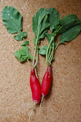 "first ""harvest"" (Susan Schwake) Tags: red green radish"
